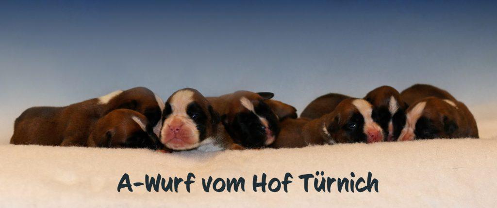 A-Wurf Gruppenfoto 2. Woche